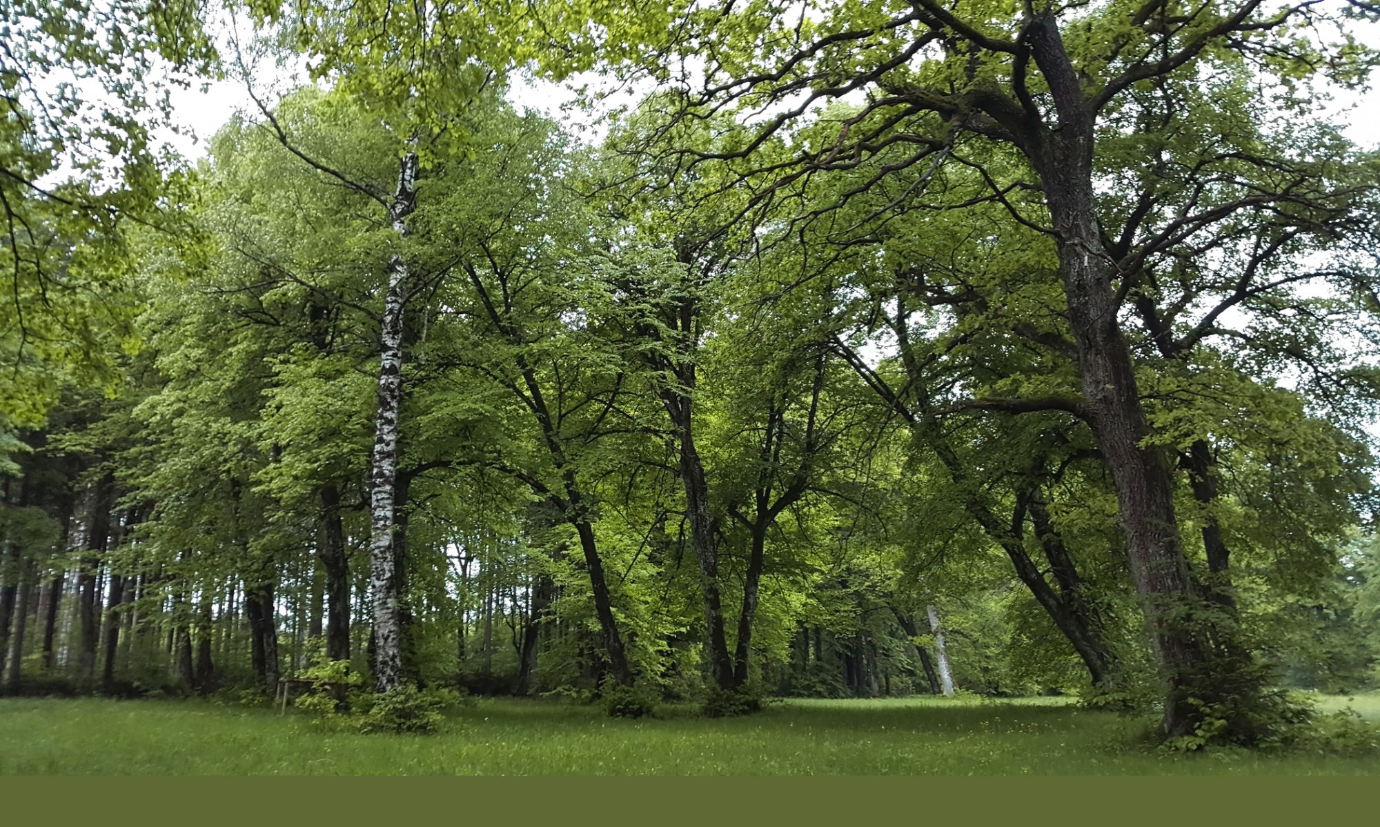 Rettet den Würmtaler Wald!